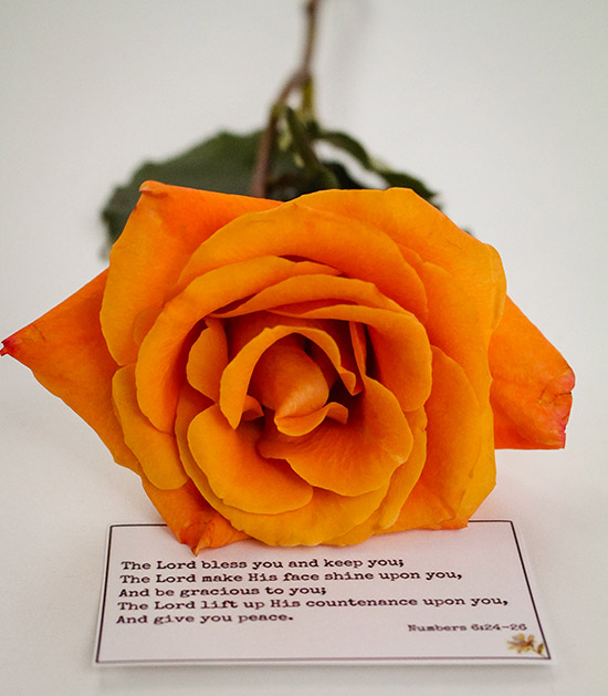 Rose and Scripture Cards