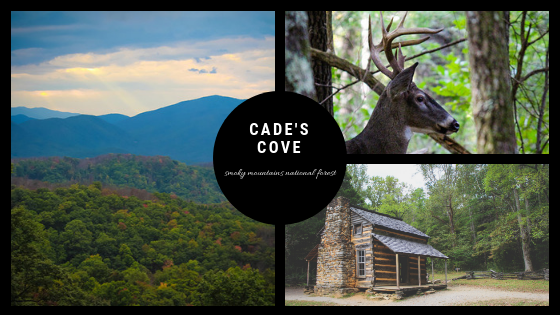 Cade's Cove Loop