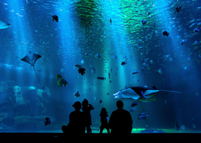 Educational Family Day Trips That Inspire Passion In Science and Nature