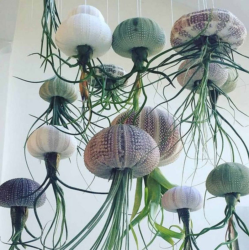 Hanging Plants for Classroom