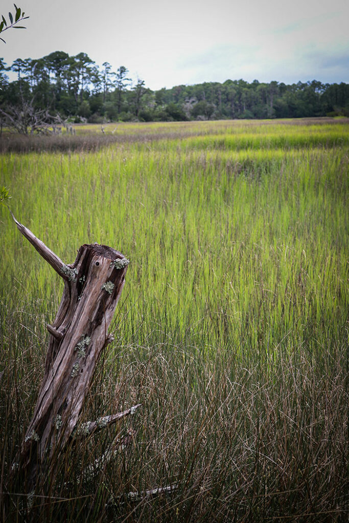 Skidaway Island State Park is a great family-friendly stop for vacationers.