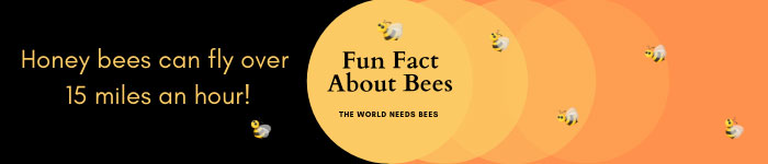 Educating kids about bees.