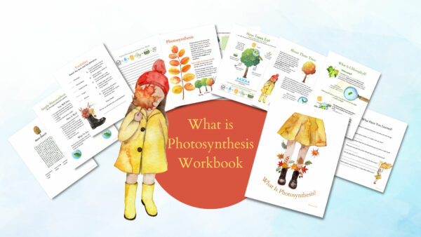 What Is Photosynthesis Lesson and Worksheets