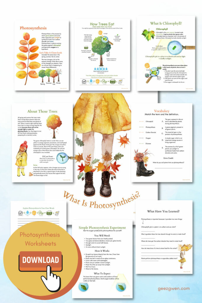Photosynthesis Lesson and Worksheets
